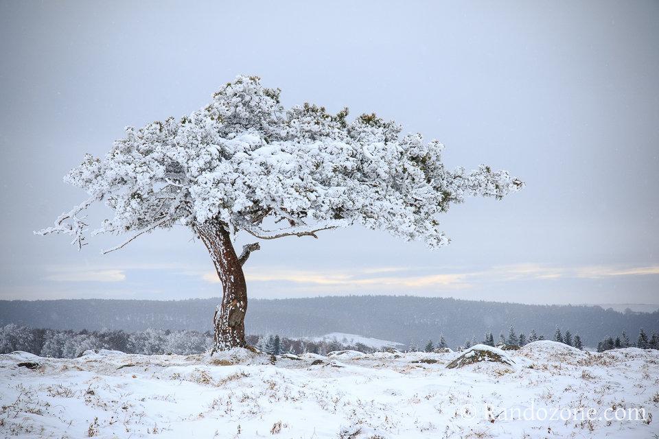 Nature givrée en Aubrac