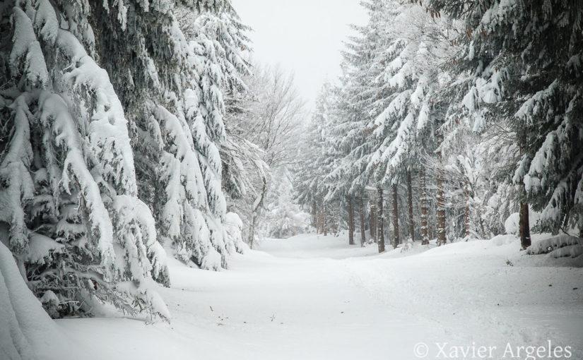 Sentier botanique de Laguiole sous la neige